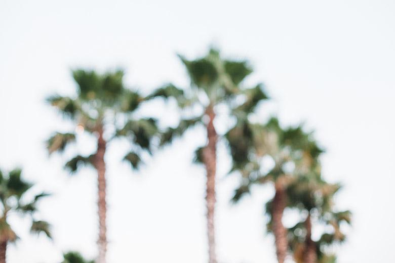beach_palms